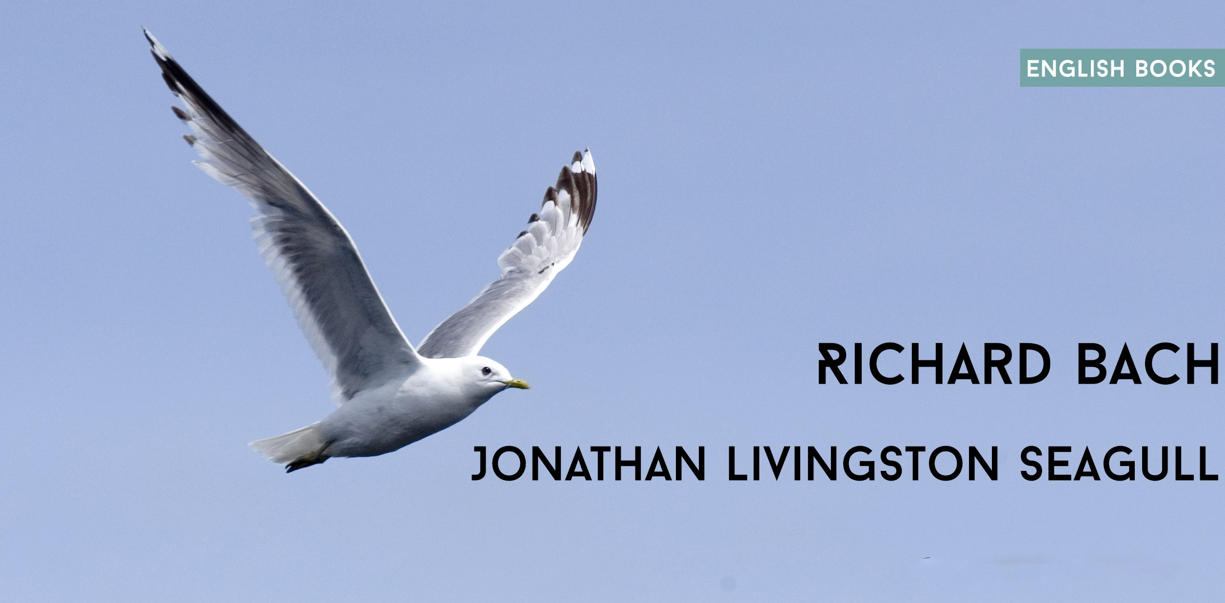 Jonathan Livingston Seagull Pdf